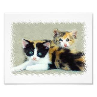 Lustiger gegenübergestellter Katzen-Foto-Druck