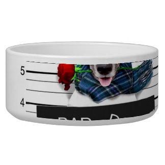 Lustiger Jack Russell, Mugshothund Napf
