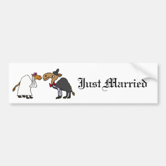 Lustiger Kamel-Braut-und Autoaufkleber