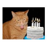 Lustiger Katzengeburtstag Postkarte