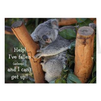 Lustiger Koala-Bär, verspätete Geburtstags-Karte Grußkarte
