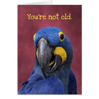 Lustiger Macaw-älterer Geburtstag als 25 Karte
