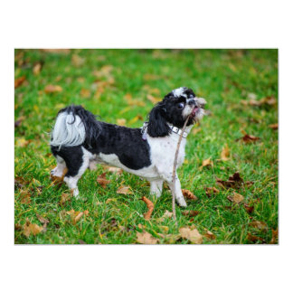 Lustiger Schwarzweiss-Hund Individuelle Einladungskarten
