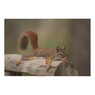 Lustiges Eichhörnchen Holzdruck
