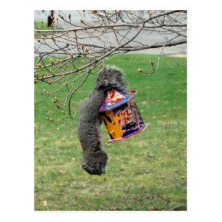Lustiges Eichhörnchen Postkarte