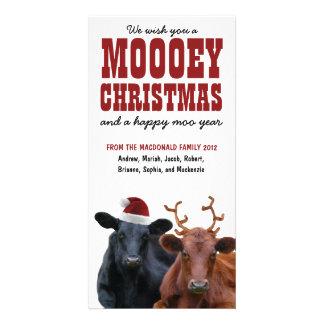 Lustiges Feiertags-Kuh-Paare Mooey Weihnachten Fotokartenvorlagen