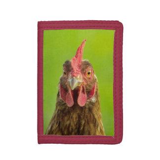Lustiges Huhn-Porträt auf Grün
