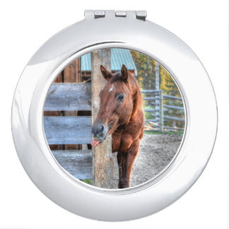 Lustiges Kastanien-Pferdestuten-Foto-Geschenk Taschenspiegel