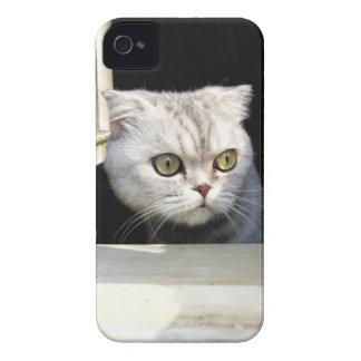 Lustiges Kätzchen iPhone 4 Cover