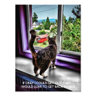 Lustiges Katzen-Plakat Kunst Fotos