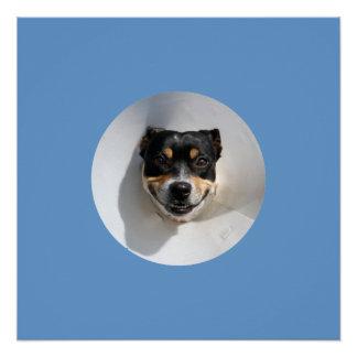 Lustiges lächelndes Hundeplakat Poster