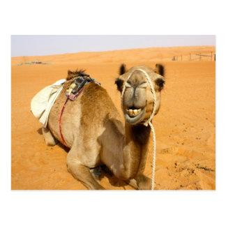 Lustiges lächelndes Kamel Postkarte