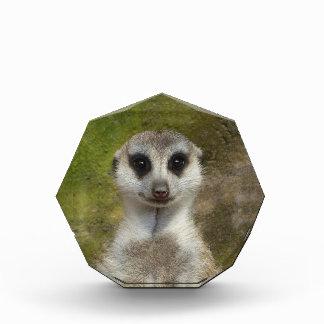 Lustiges Meerkat 002 02_. Acryl Auszeichnung