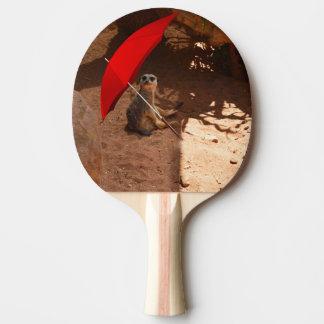 Lustiges Meerkat, das unter Regenschirm sitzt, Tischtennis Schläger