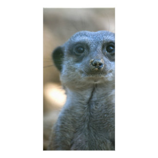 Lustiges Meerkat Individuelle Photo Karten