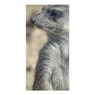 Lustiges Meerkat Photokarten