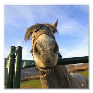 Lustiges Pferd Kunst Fotos