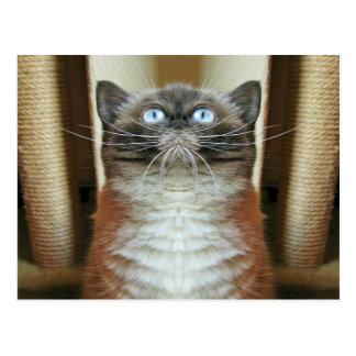 Lustiges Porträt der mit blauen Augen Katze Postkarte