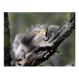 Lustiges schläfriges Eichhörnchen-leere Karte Postkarten