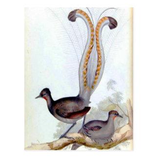 Lyre-Vogel-Vintages Plakat Postkarte