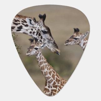 Maasai Giraffe (Giraffe Tippelskirchi) wie gesehen Plektrum