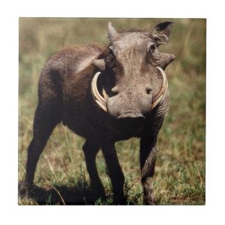 Maasai Mara nationale Reserve, Wüste Warthog Fliese