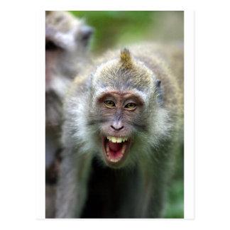Macaqueaffe Postkarte