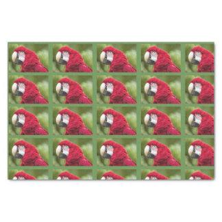 Macaw-Seidenpapier Seidenpapier