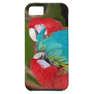 Macawpapageiendruck iphone Abdeckung iPhone 5 Schutzhüllen