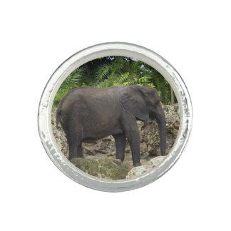Mächtiger Elefant Foto Ringe