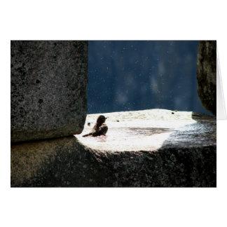 Machu Picchu, Peru, Birdbath im Steinfenster Karte