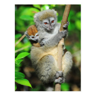 Madagaskar, Andasibe, Ile ZusatzLemuriens, Mutter Postkarte
