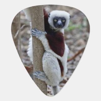 Madagaskar, Ankarafantsika Reserve; Ampijoroa; Plektron
