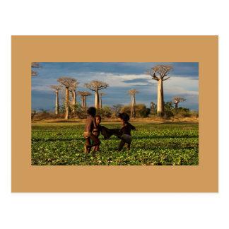 Madagaskar Baobab Postkarte