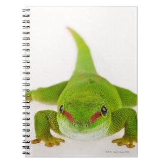 Madagaskar-Tagesgecko (Phelsuma madagascariensis) Spiral Notizbuch