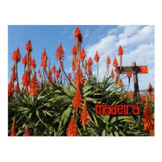 Madeira-Aloepostkarte, fertigen besonders an Postkarten