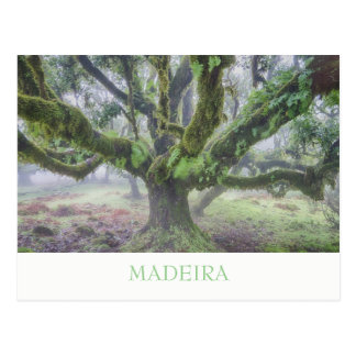 Madeira - Lorbeerbaumpostkarte mit Text Postkarte