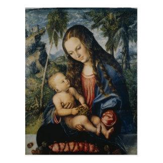 Madonna unter dem Tannenbaum, c.1510 Postkarte