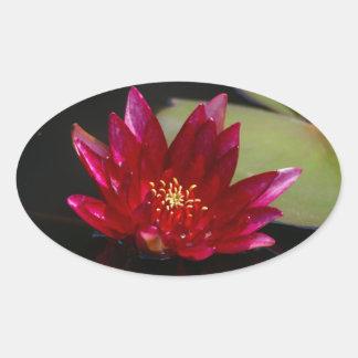 Magentarote Lotos-Wasserlilie Ovaler Aufkleber