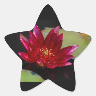 Magentarote Lotos-Wasserlilie Stern-Aufkleber