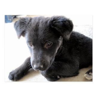 Maggie, niedlicher schwarzer Labrador-Welpe Postkarte