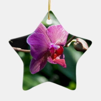 Magische Orchidee Keramik Ornament