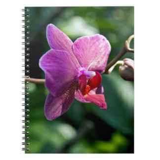 Magische Orchidee Notizblock
