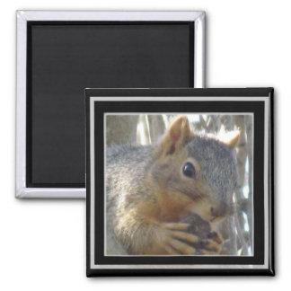 Magnet - Eichhörnchen im schwarzen Rahmen