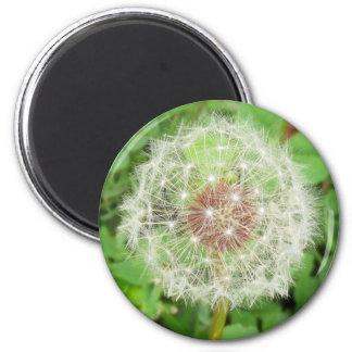Magnet - Löwenzahn-Samen-Ball Runder Magnet 5,1 Cm