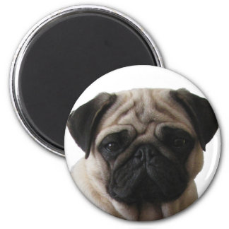 Magnet Mops Pug Runder Magnet 5,1 Cm