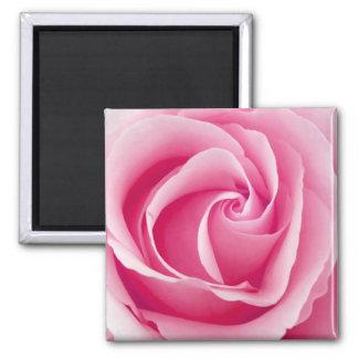 Magnet rosa Damen-Rose - Quadrat Quadratischer Magnet