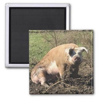 Magnet - Sheila mein großes fettes Schwein