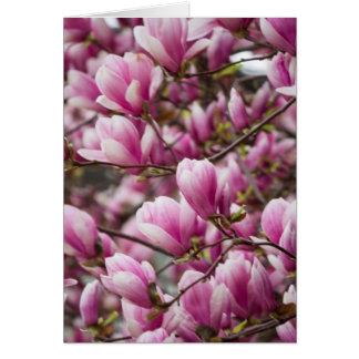 Magnolie, die auf Baum blüht Grußkarte