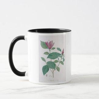 Magnolie entfärben, graviert durch Legrand (die Tasse